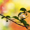 秋の日の開花