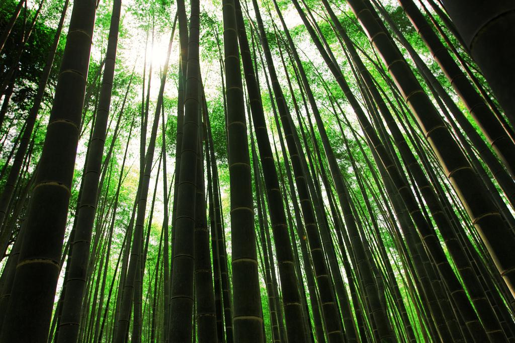 668蒼き林