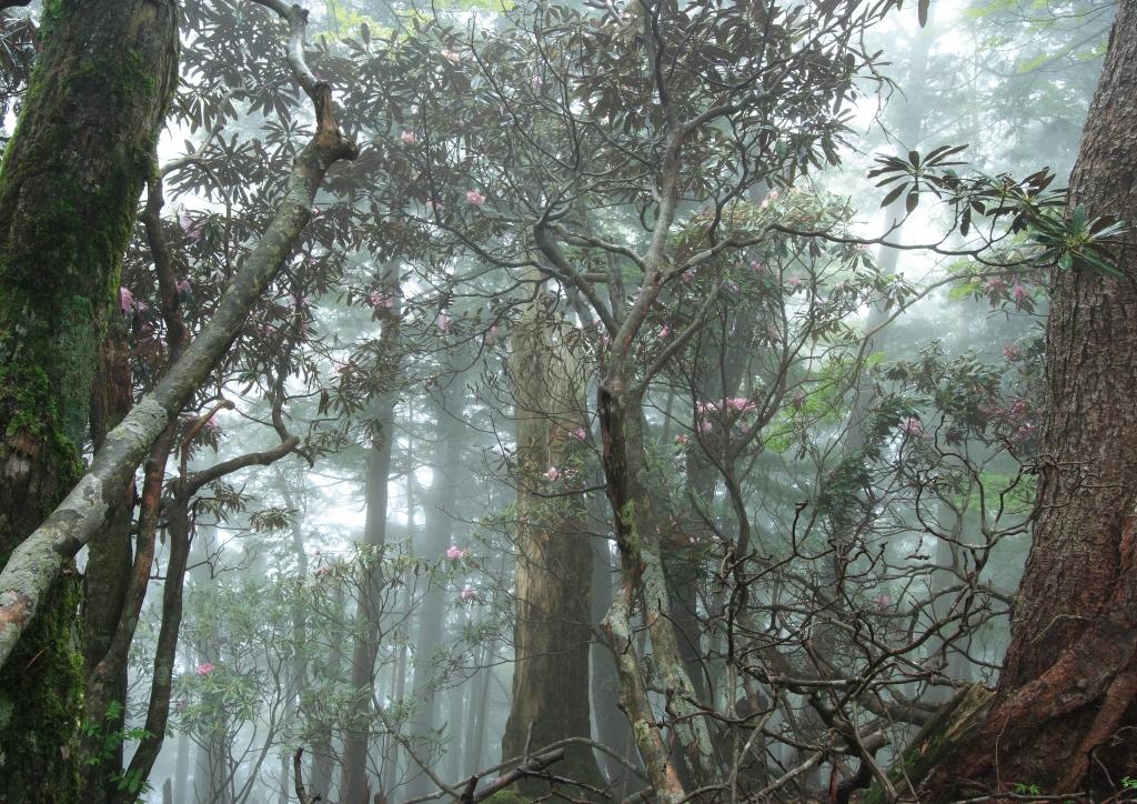 奈良県 七面山