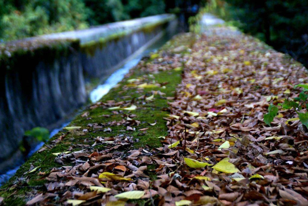 南禅寺の水路