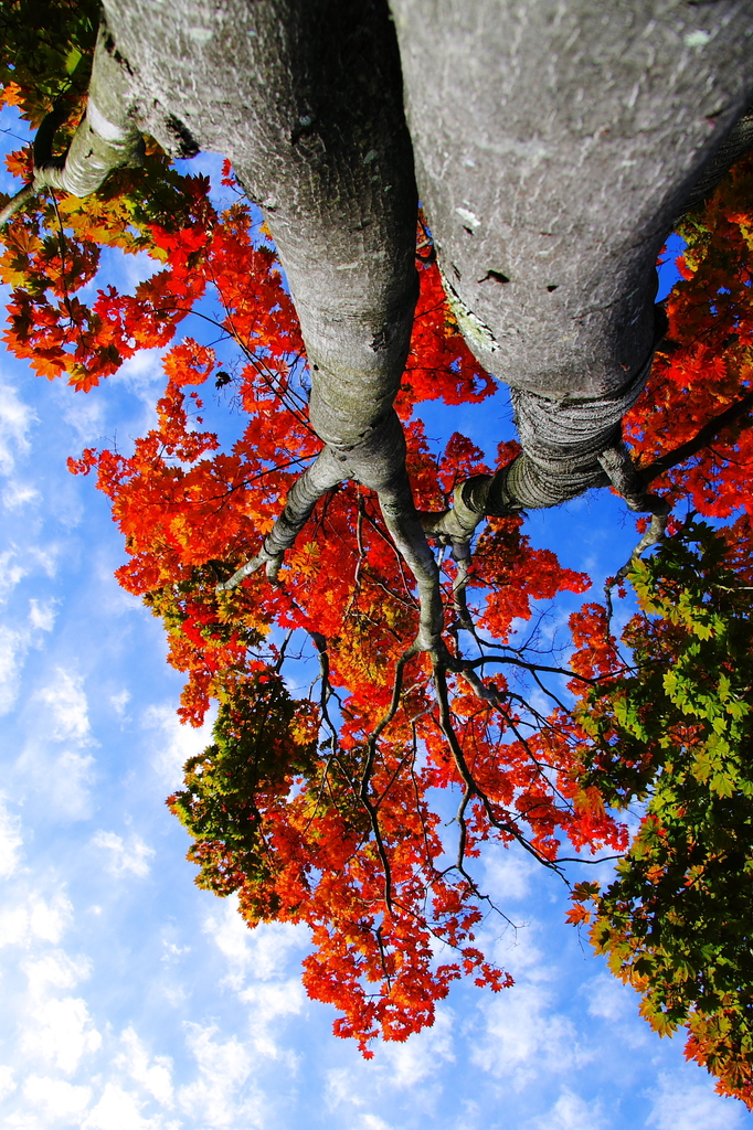 見上げると・・・そこは秋の空。。