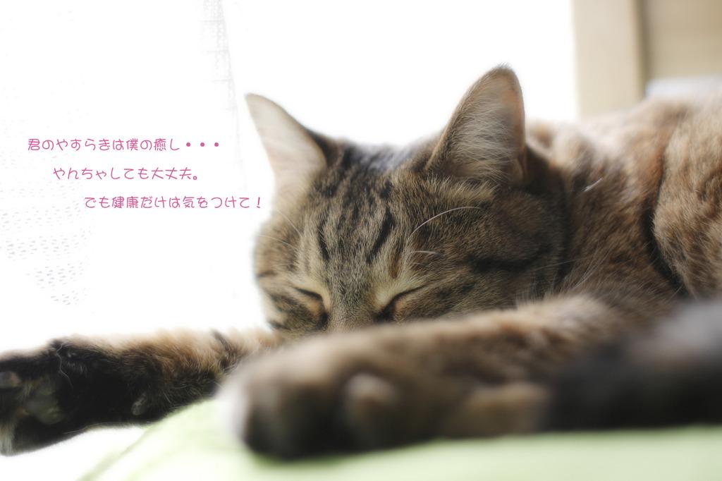 猫の日記念!
