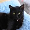 黒猫にレフ板