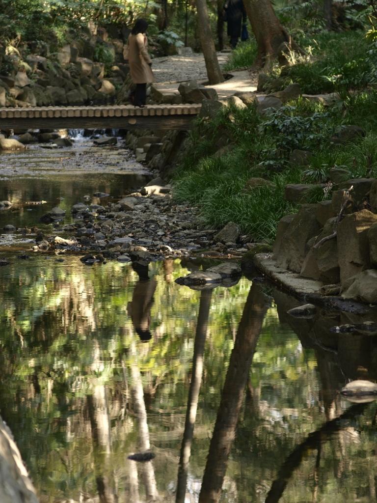 水辺の木漏れ日