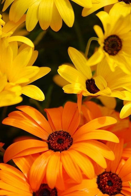 黄色い花とオレンジの花