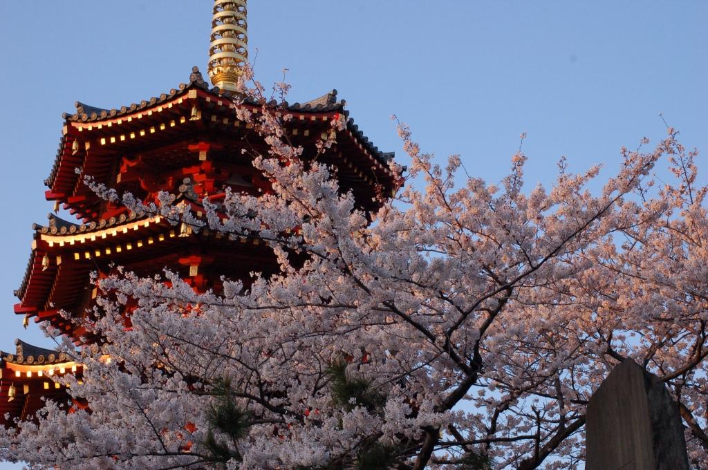 2008年の桜と八角五重塔
