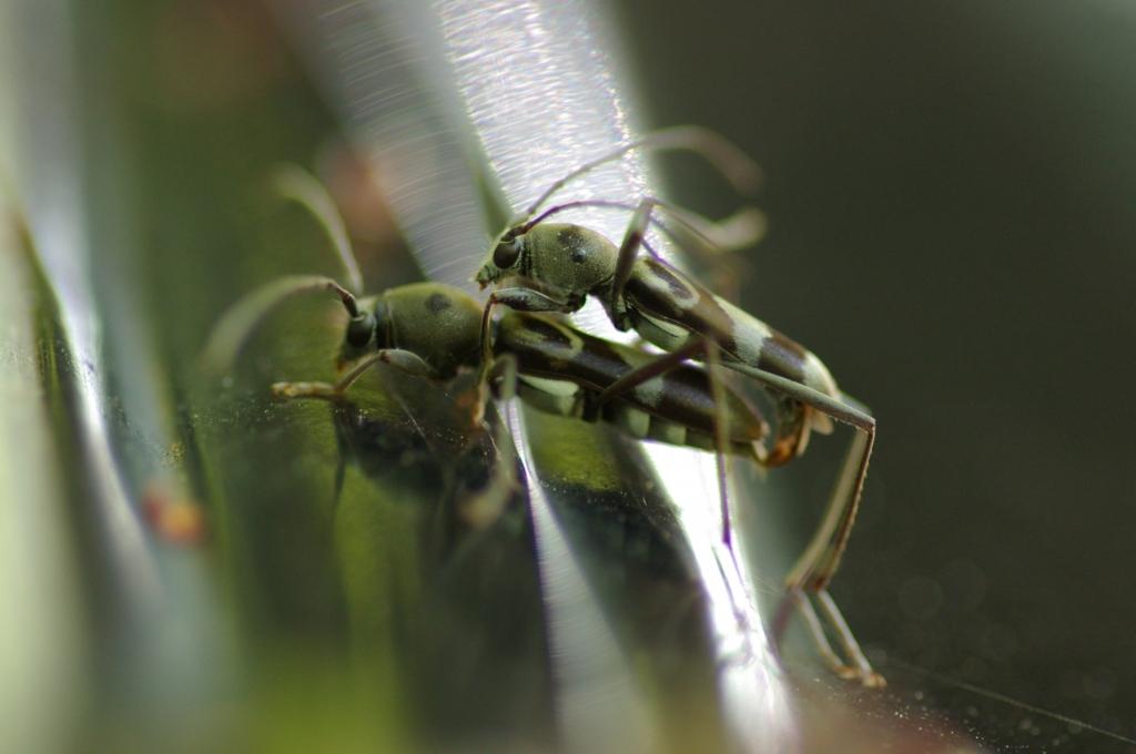 小虫の交尾