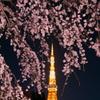 夜桜東京タワー