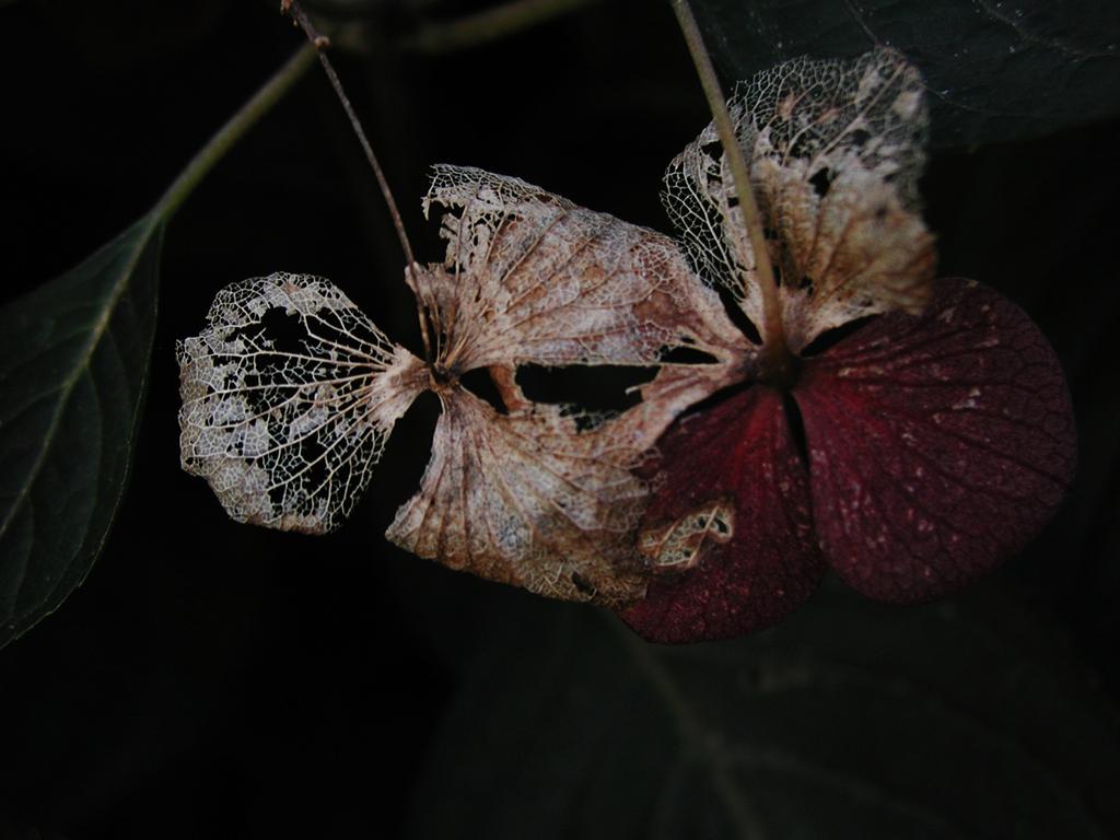 Flower Ⅱ