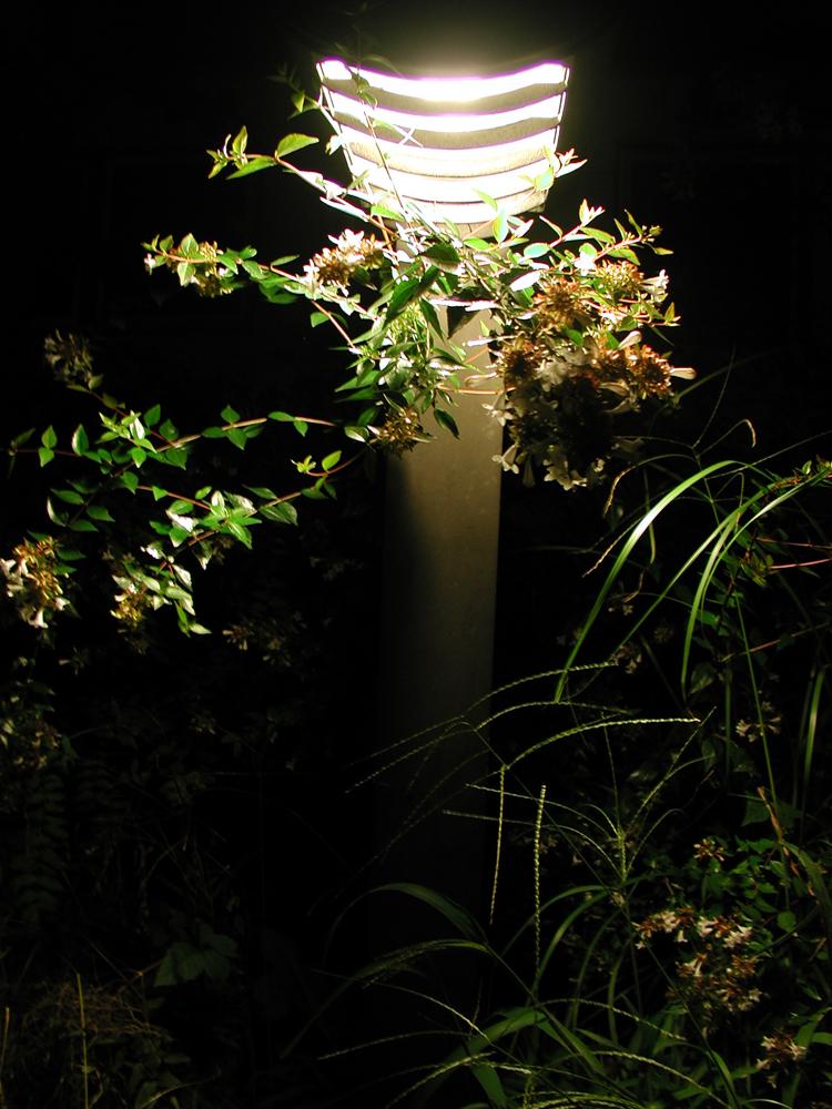 闇の中に咲く
