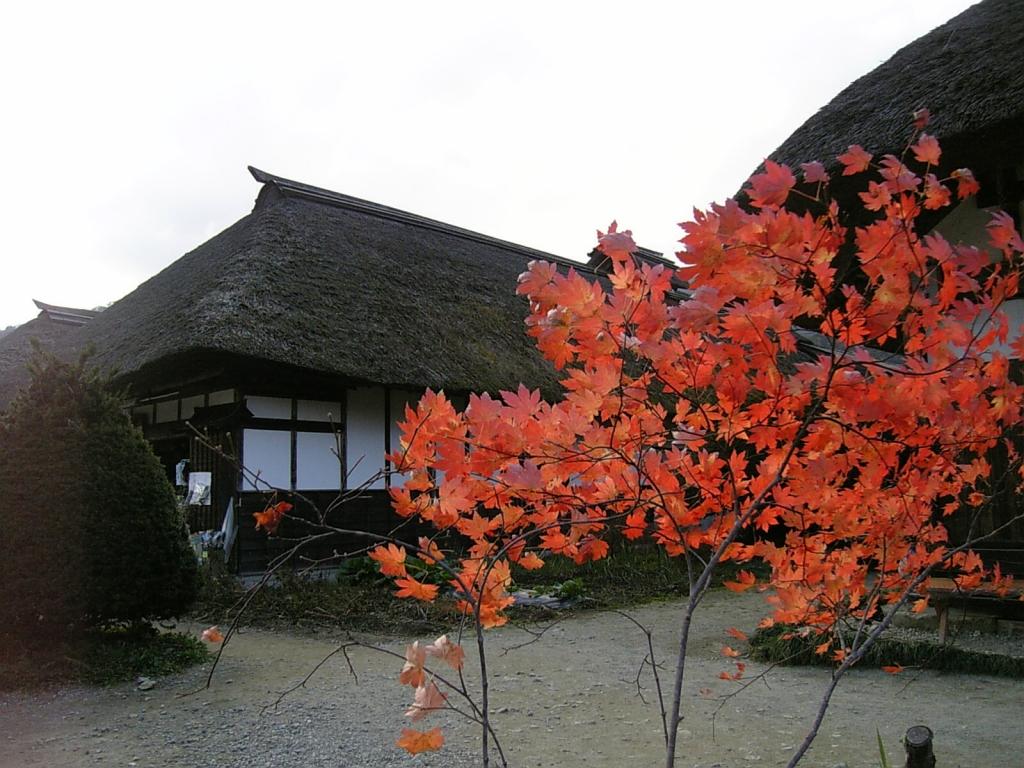 日本家屋と楓