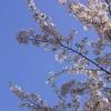 舞う花弁・SAKURA