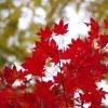 定山渓の秋