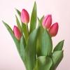 花瓶のチューリップ