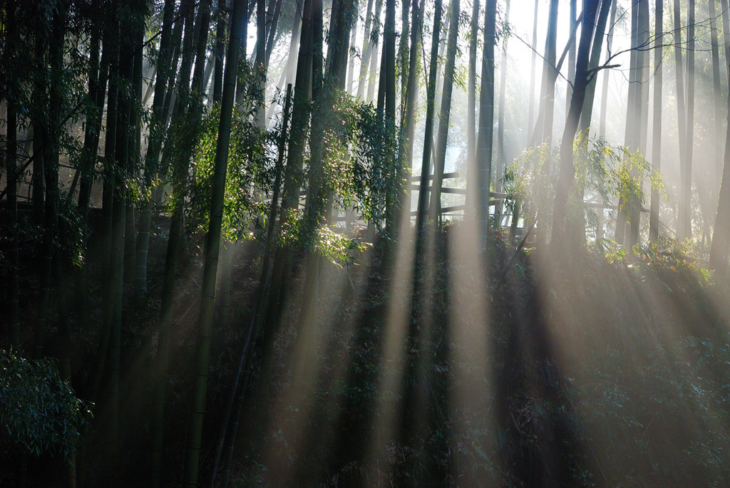 木洩れ日2