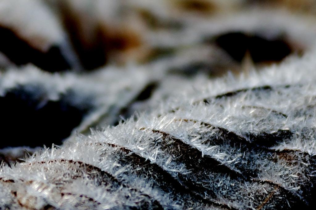 落葉に氷の結晶
