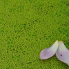 緑の中の花びら