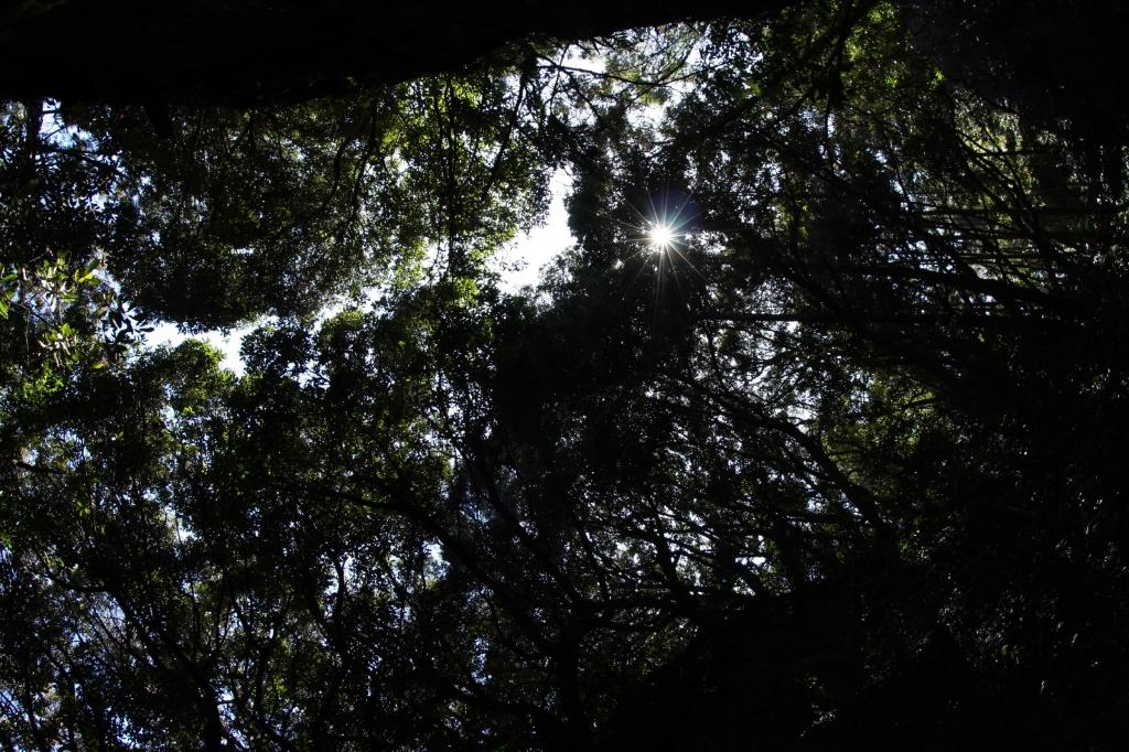 千葉のジャングル#1