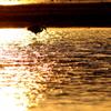 琥珀色の海