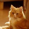 猫カフェ「猫の時間」の猫