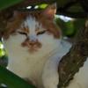 ちびを睨みつける元祖メタボ猫「マロ」