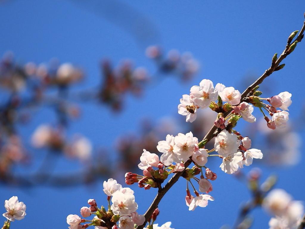 本格的な春到来♪