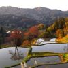 秋の棚田夕刻