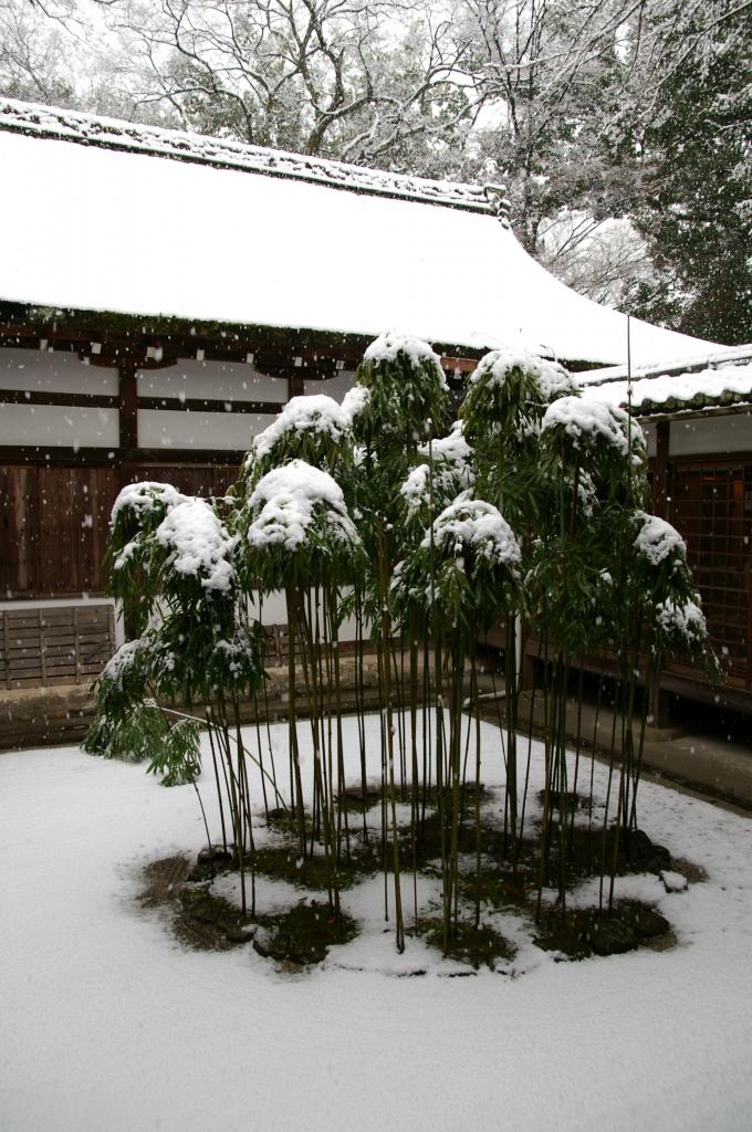 京都、上賀茂神社