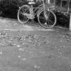 ノットバイク