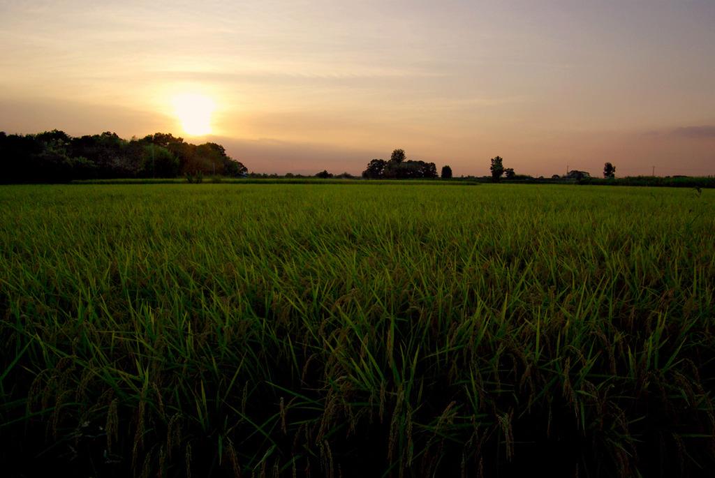 夕暮れ田圃