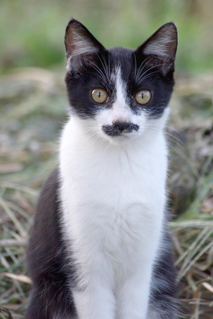 「子猫」1
