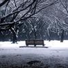 Park of snow
