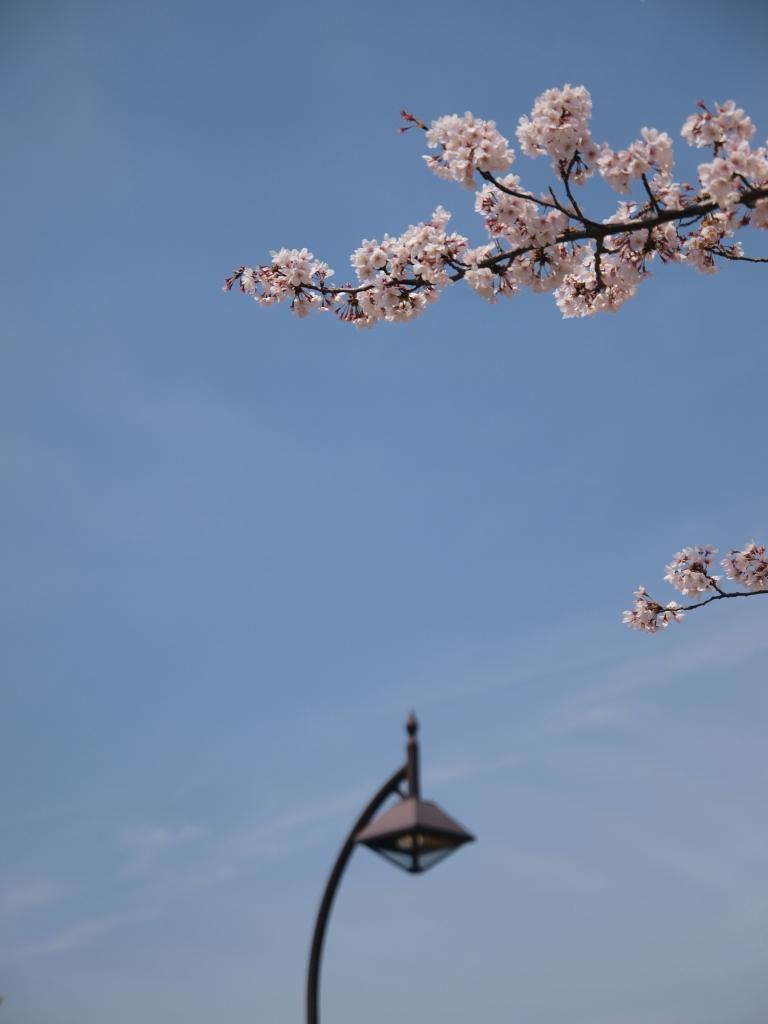 空と桜と街灯と