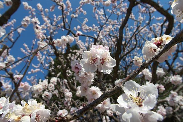 2008年春・神代植物公園