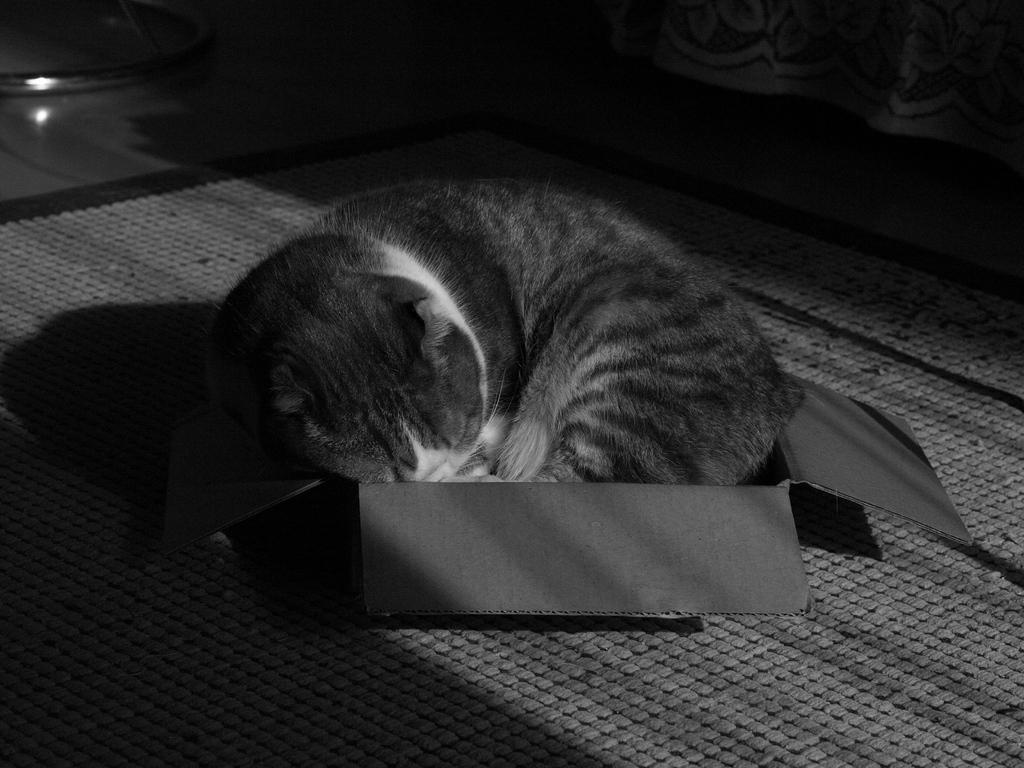小さい箱が大好き
