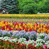 彩の花たち