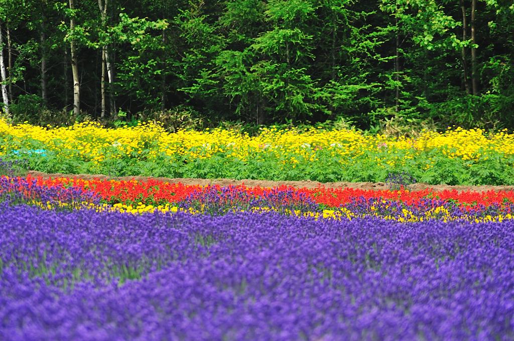 花のコントラスト