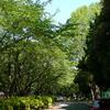 W61Sで新緑の公園