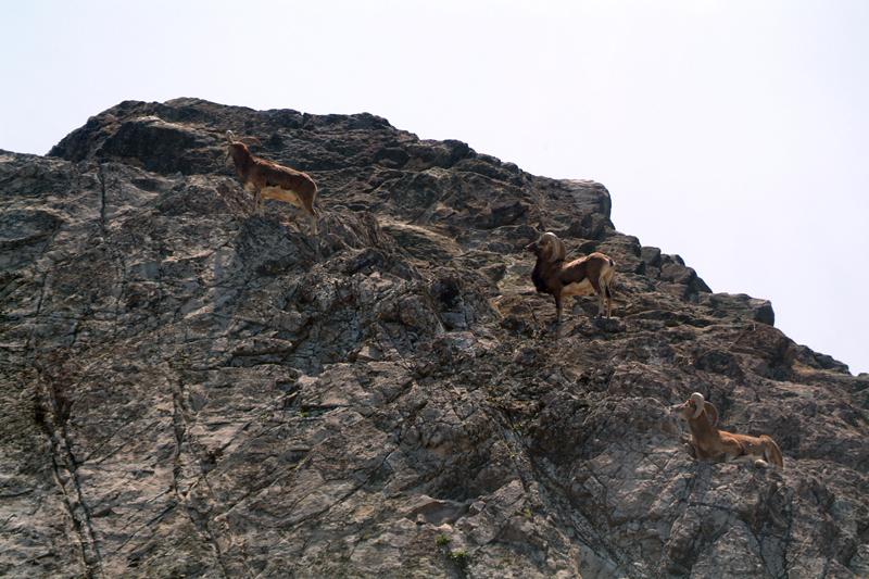 岩の上が生息地