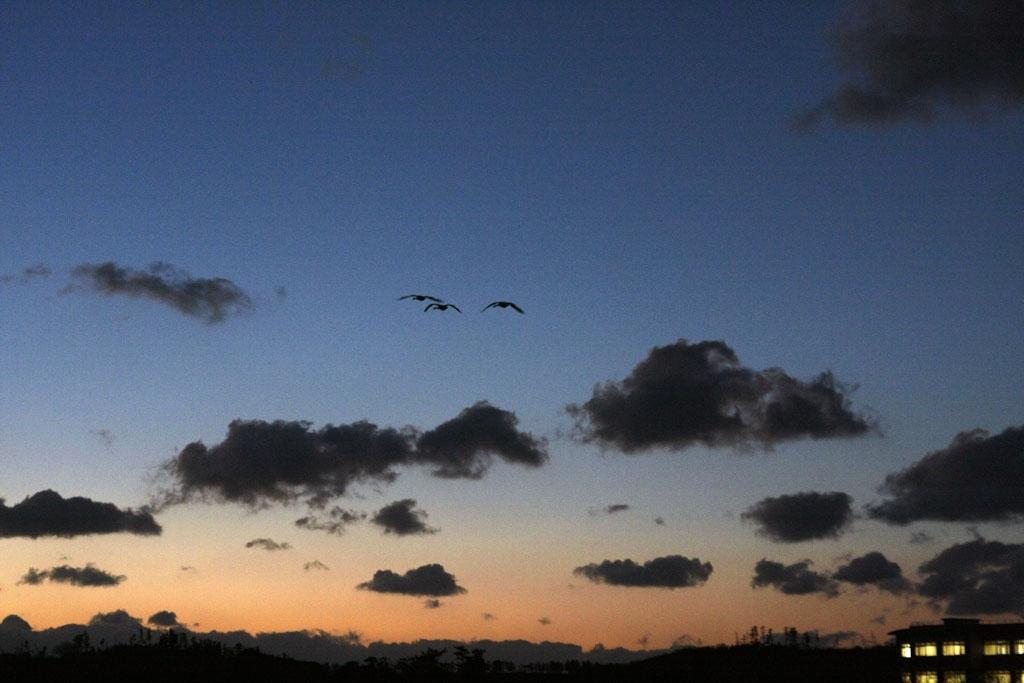 夕闇の中を飛ぶ