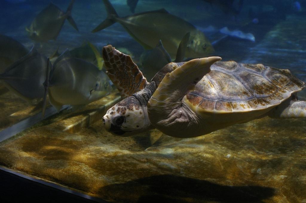 鴨川シーワールドの水族館