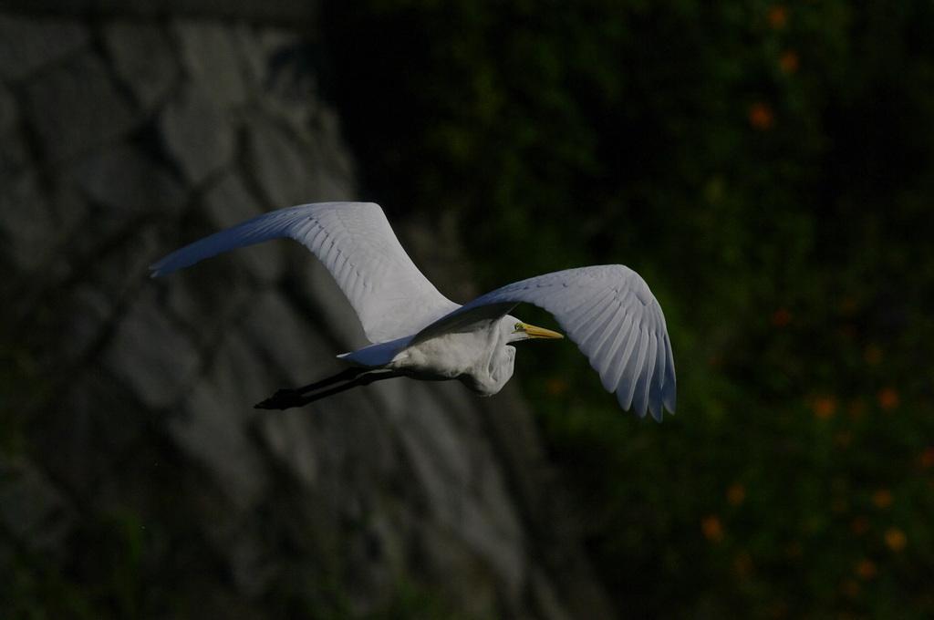 翼の中からこんにちは