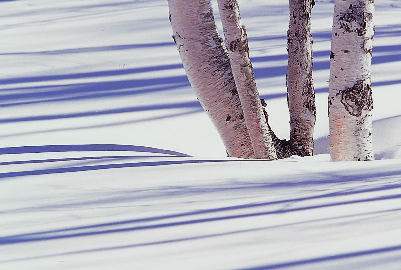木影のシュプール
