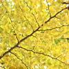 昇仙峡の紅葉2