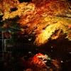 京都高台寺紅葉ライトアップ