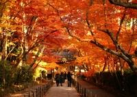 KONICA MINOLTA ALPHA SWEET DIGITALで撮影した風景(京都府長岡京市光明寺紅葉)の写真(画像)
