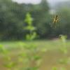 蜘蛛と蜘蛛の巣