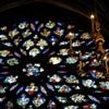 教会の青い花