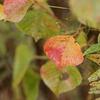 1161 農道の紅葉2