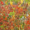 0122m 農道の紅葉